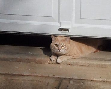 HOW TO KEEP CATS OUT OF GARAGE